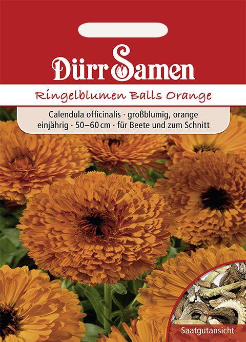 Dürr Samen Ringelblume  Balls Orange, einjährig, 50–60cm