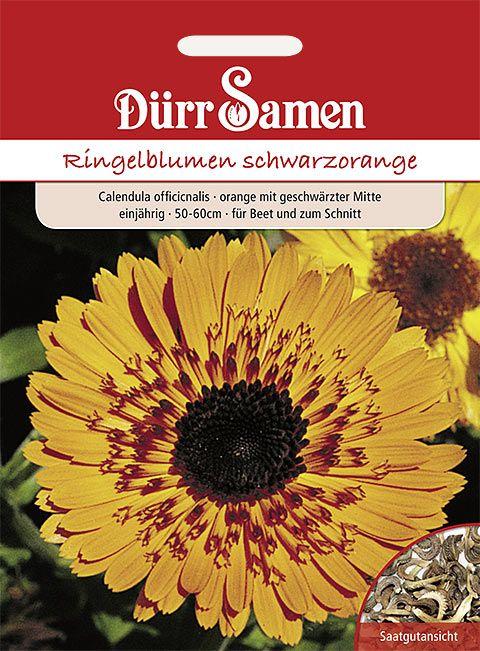 Dürr Samen Ringelblume  Princess schwarzorange, einjährig, 50–60cm
