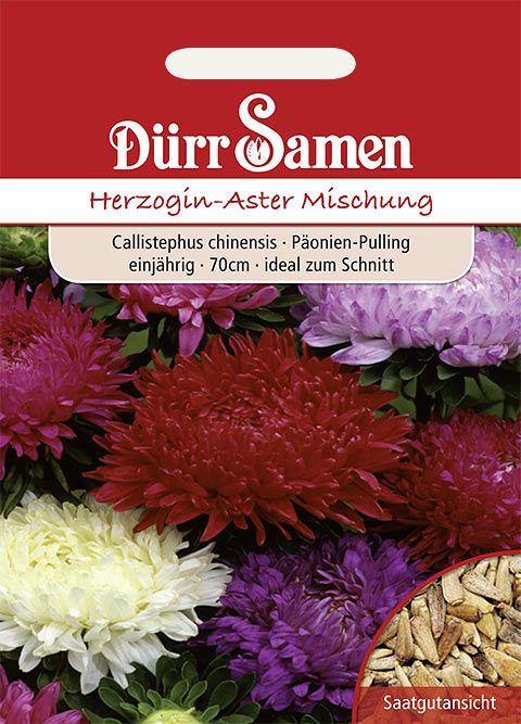 Dürr Samen Herzogin-Aster Prachtmischung, einjährig, 70cm