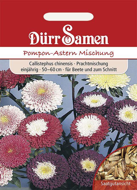 Dürr Samen Pompon-Aster Prachtmischung, einjährig, 50-60cm