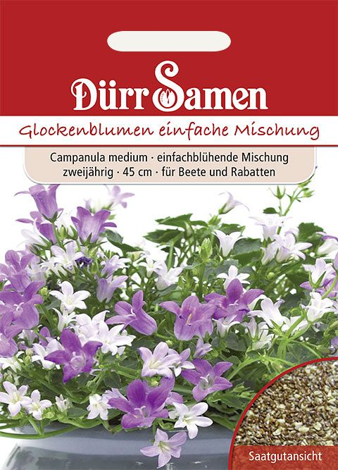 Dürr Samen Glockenblume einfache Mischung