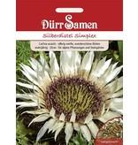 Dürr Samen Silberdistel  Simplex Großtüte, silbrig-weiß, mehrjährig, 20cm