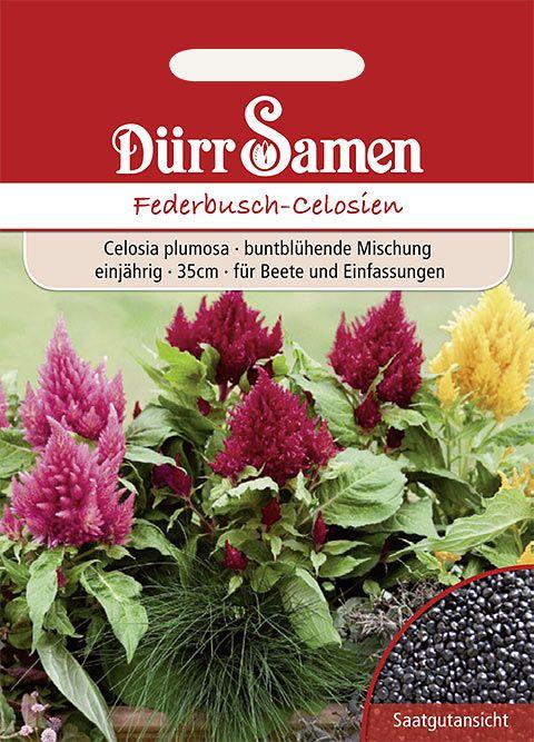 Dürr Samen Federbusch-Celosien Mischung, einjährig, 35cm