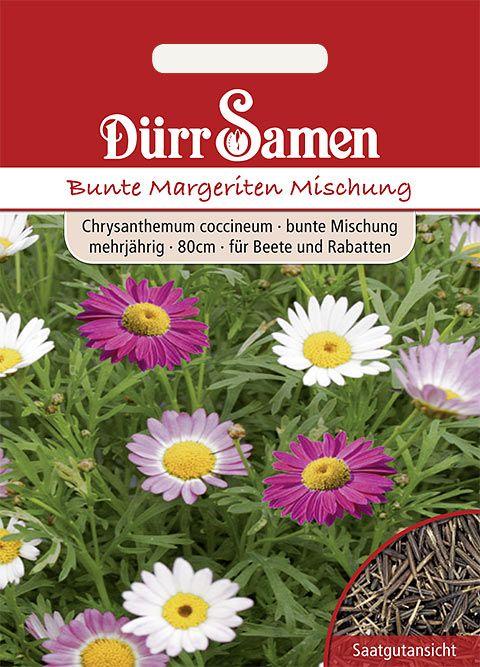 Dürr Samen Bunte Margeriten Bunte Mischung,mehrjährig, 80cm