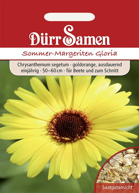 Dürr Samen Sommer-Margeriten  Gloria, goldorange, einjährig, 50–60cm