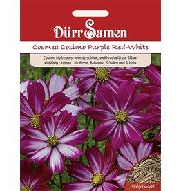 Dürr Samen Cosmea  Cosimo Purple Red-White, einjährig, 100cm