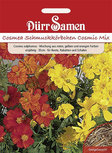 Dürr Samen Cosmea Cosmic Mix Cosmic Mix, gelb, rote, orange Töne, einjährig, 35cm