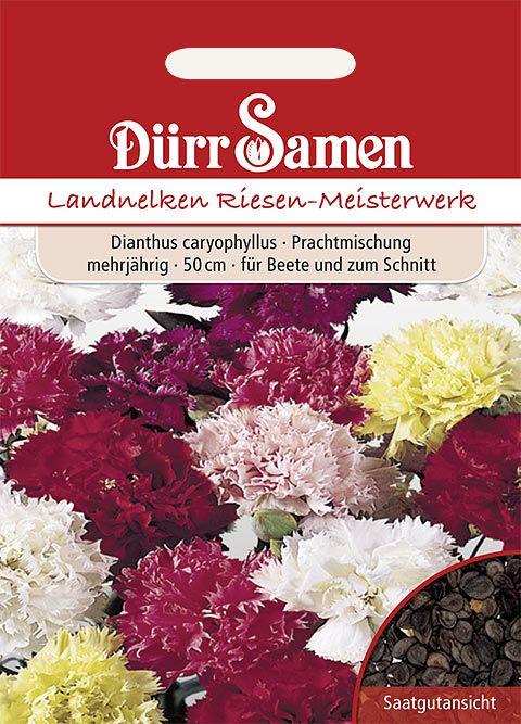 Dürr Samen Land- oder Gartennelke Prachtmischung, mehrjährig, 50cm