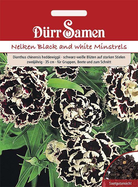 Dürr Samen Nelken Black and White T&M