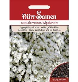 Dürr Samen Schleierkraut Gefüllt weiße Blüten, mehrjährig, 90cm
