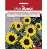 Dürr Samen Sonnenblume  Solara F1, goldene Blüten mit schwarzer Mitte, einjährig, 120–150cm