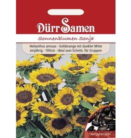 Dürr Samen Sonnenblume  Sonja, goldorange mit dunkler Mitte, einjährig, 100cm