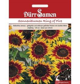 Dürr Samen Sonnenblume  Ring of Fire, goldgelbe und rotbraune Petalen mit dunkler Mitte, einjährig, 120cm