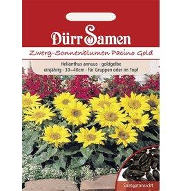Dürr Samen Sonnenblume Pacino Gold, goldgelbe Blüten, einjährig, 40cm