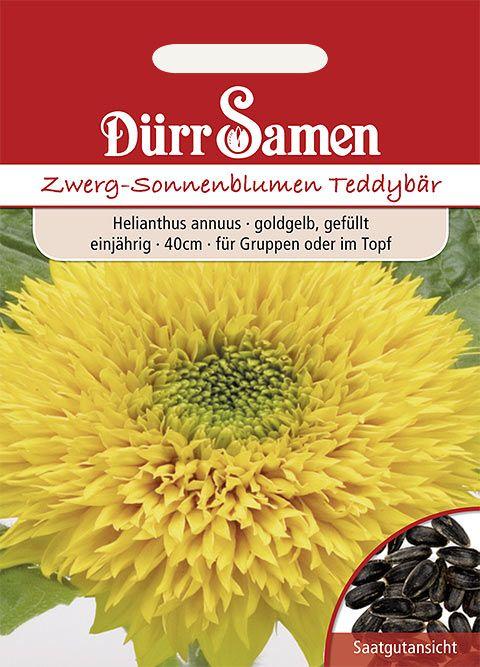 Dürr Samen Sonnenblume  Teddybär, goldorange gefüllt, einjährig, 40cm