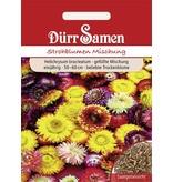 Dürr Samen Strohblume Gefüllte Mischung, einjährig, 50–60cm
