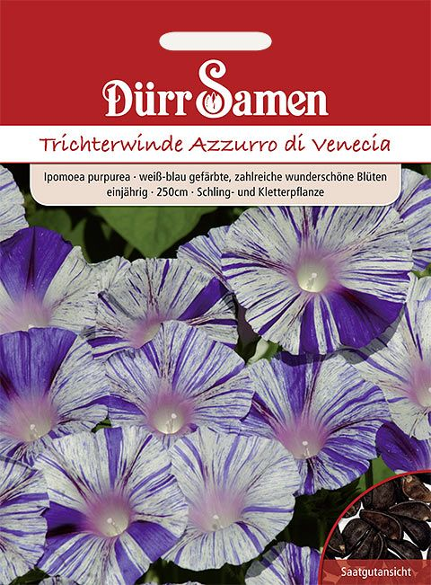 Dürr Samen Trichterwinde  Azzurro di Venizia, einjährig, 250cm