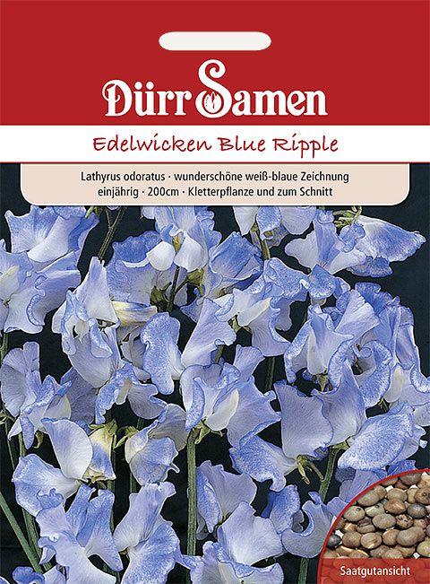 Dürr Samen Edelwicken  Blue Ripple, blau-weiß, 200cm