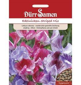 Dürr Samen Edelwicken  Striped Mix, gestreifte Blüten, einjährig, 200cm