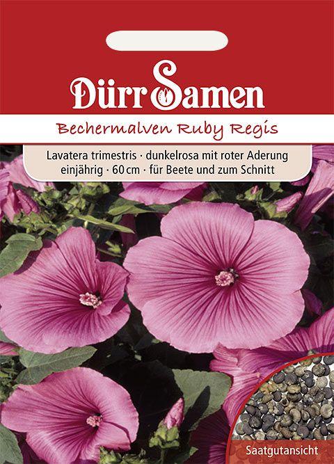 Dürr Samen Bechermalve  Ruby Regis, dunkelrosa mit roter Aderung, einjährig, 60cm