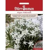 Dürr Samen Alpen-Edelweiß  Grau bis weiße, sternartige Blüten, mehrjährig, 15cm