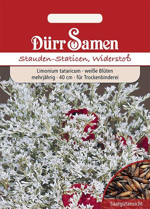Dürr Samen Statice  Widerstoß, weiß, mehrjährig, 40cm