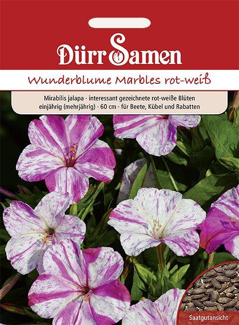 Dürr Samen Wunderblume Marbles rot-weiß, einjährig, 60cm