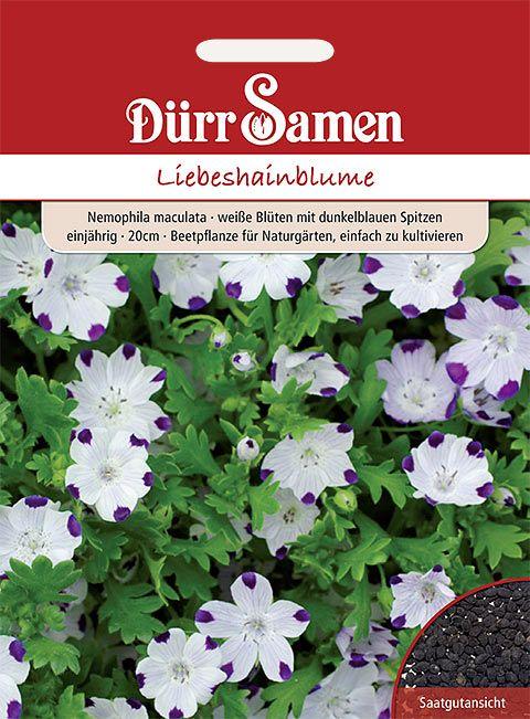 Dürr Samen Liebeshainblume Weiße Blüten mit violetten Spitzen, einjährig, 20cm