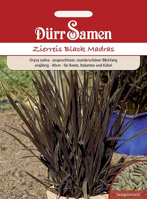 Dürr Samen Zierreis  Black Madras