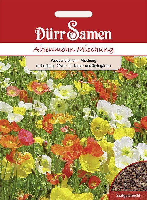 Dürr Samen Alpenmohn  Mischung, mehrjährig, 20cm