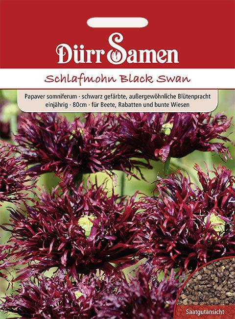 Dürr Samen Schlafmohn  Black Swan, schwarz gefärbte Blüten, einjährig, 80cm