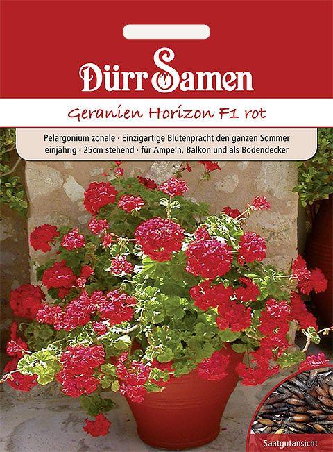 Dürr Samen Geranien Horizon F1, einjährig, 25cm