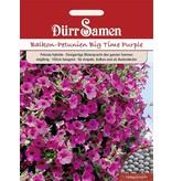 Dürr Samen Petunien  Purple Wave F1, einjährig, 100cm