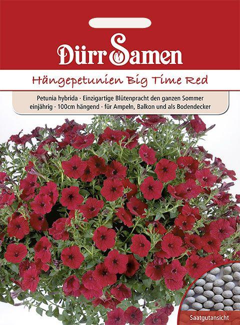 Dürr Samen Petunien  Big Time Red, einjährig, 100cm