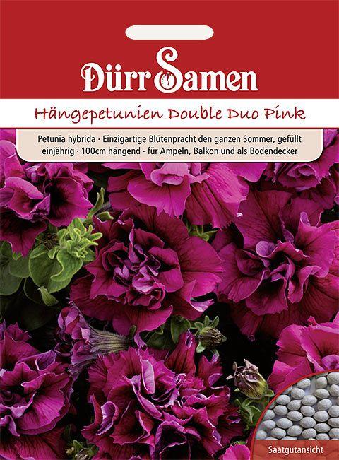Dürr Samen Petunien  Double Duo Pink, einjährig, 100cm