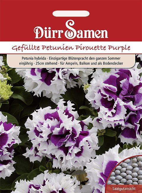 Dürr Samen Petunien  Pirouette Purple, einjährig, 25cm