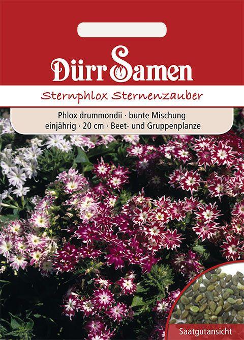 Dürr Samen Sternphlox Mischung, einjährig, 20cm
