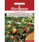 Dürr Samen Lampionblume Orangerot, mehrjährig, 100cm