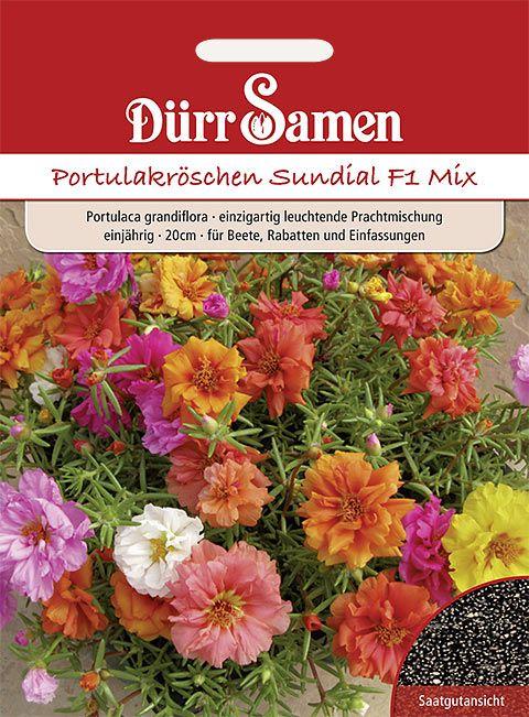 Dürr Samen Portulakröschen  Sundial F1 Mix, leuchtende Prachtmischung, einjährig, 20cm