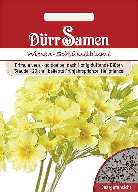 Dürr Samen Wiesen-Schlüsselblume Goldgelbe nach Honig duftende Blüten, mehrjährig, 20cm