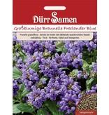 Dürr Samen Prunella Braunelle Blau gefärbte Blüten, mehrjährig, 15cm