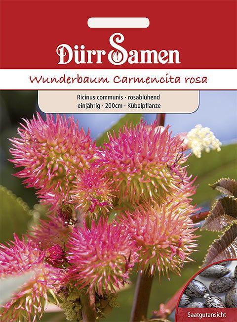 Dürr Samen Wunderbaum Rosablühend, einjährig, 200cm