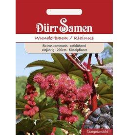 Dürr Samen Wunderbaum Rotblühend, einjährig, 200cm