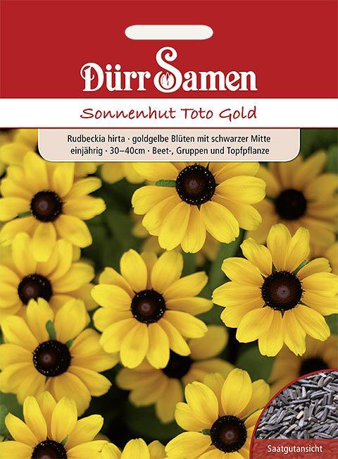 Dürr Samen Sonnenhut  Toto Gold, goldgelbe Blüten, einjährig, 30–40cm