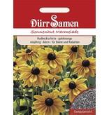 Dürr Samen Sonnenhut  Marmelade, goldorange Blüten, einjährig, 60cm