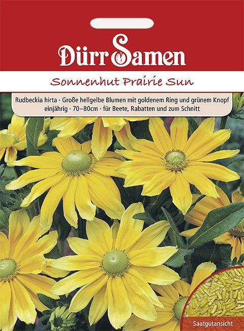 Dürr Samen Sonnenhut  Prairie Sun, hellgelbe Blüten, einjährig, 70–80cm