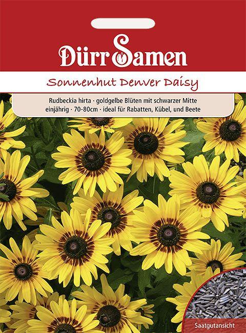 Dürr Samen Sonnenhut  Denver Daisy, goldgelbe Blüten mit schwarzer Mitte, einjährig, 70–80cm