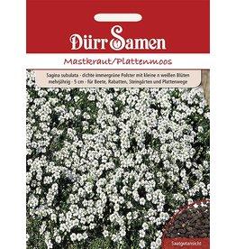 Dürr Samen Sagina Mastkraut/Plattenmoos Kleine weiße Blüten, mehrjährig, 5cm