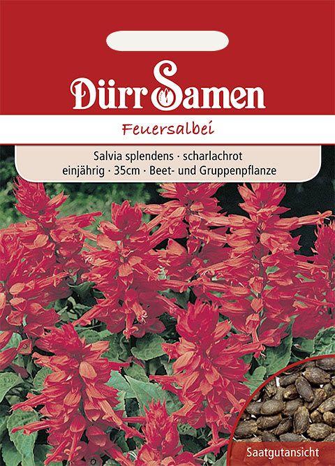 Dürr Samen Feuersalbei Scharlachrot, einjährig, 35cm