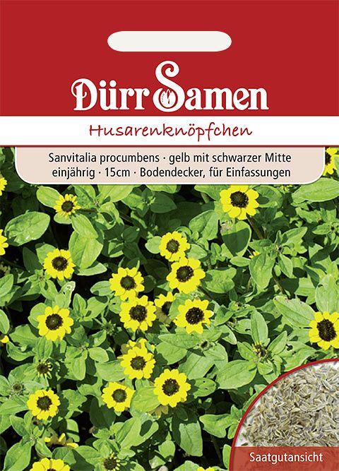Dürr Samen Husarenknöpfchen Gelb mit schwarzer Mitte, einjährig, 20cm